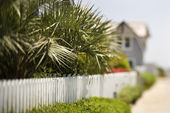 White picket fence with palms. — Stock Photo