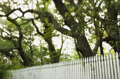 White picket fence with trees. — Stock Photo