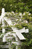 Arbor with blooming rose vine. — Stock Photo