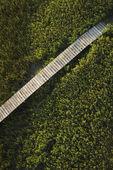 Boardwalk over marsh. — Stock Photo