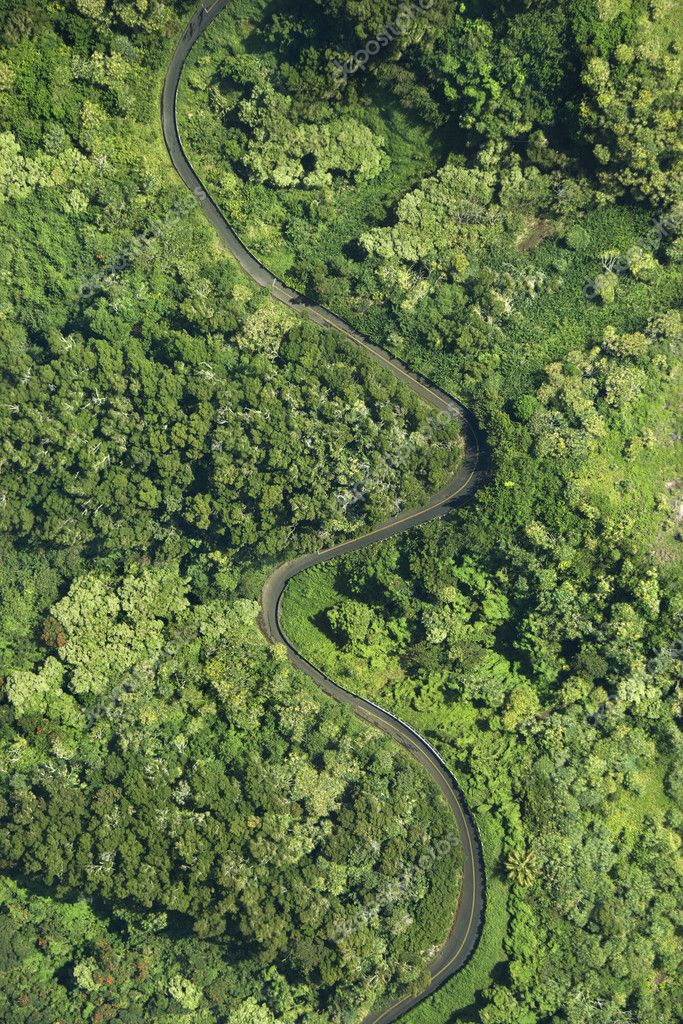 Aerial view of winding road through lush green forest in Maui, Hawaii. — Stock Photo #9434859