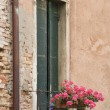 Window with flowers. — Stock Photo
