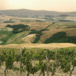 Tuscan vineyard landscape. - Stock Photo