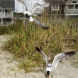 Seagulls swooping onto beach. — Stock Photo #9498254