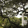 House with live oak tree. — ストック写真
