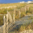 Natural sand dune beach area. — Stock Photo #9498570
