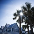 House with palms. — Stock Photo #9498647