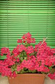 Flowers on window sill. — Stock Photo
