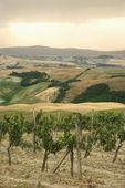 Tuscan vineyard landscape. — Stock Photo