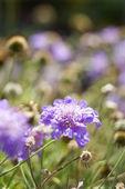 Purple flowering plant. — Stock Photo