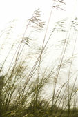 Long grass. — Stock Photo