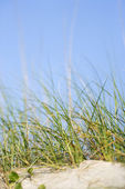 Grass at beach. — Stock Photo