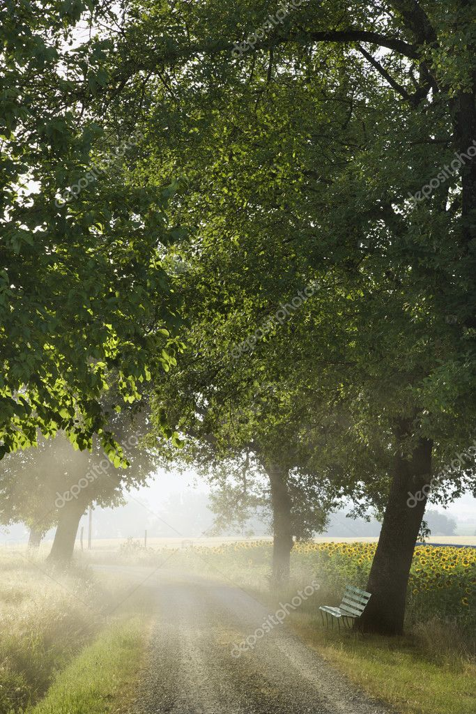 A bench sitting under a tree next to a gravel road. It is in a mist and beside a field of sunflowers. Vertical shot. — Stock Photo #9496972