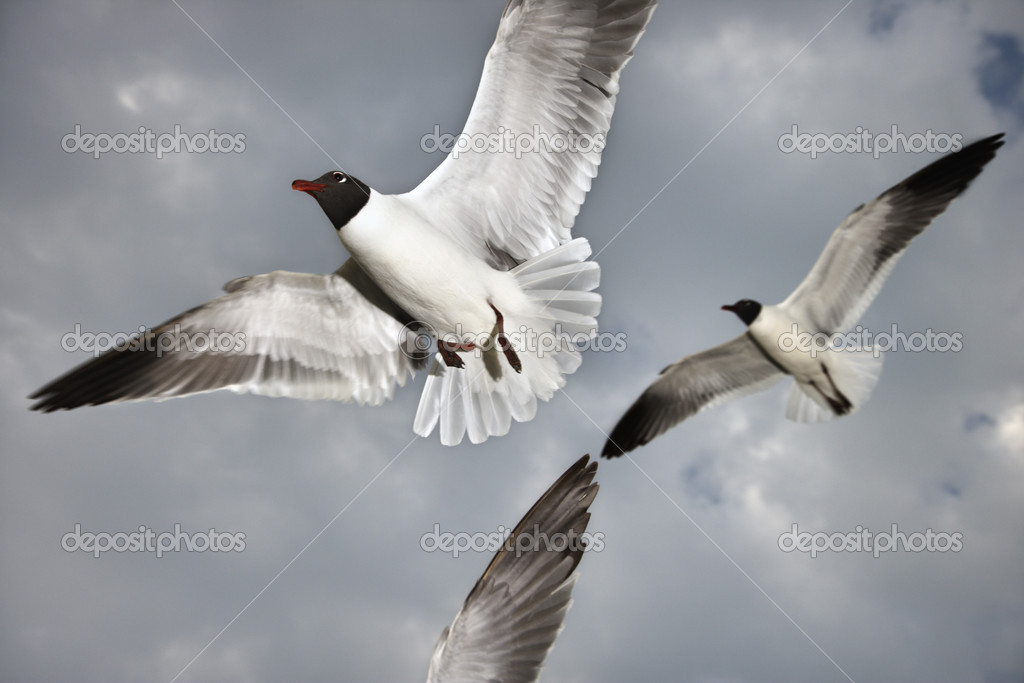 Seagulls in flight. — Stock Photo #9498260