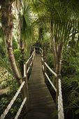 Wooden pathway at Lisbon Aquarium. — Stock Photo