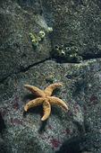 Starfish underwater. — Stock Photo