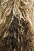 Long wavy hair. — Stock Photo