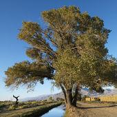 Tree by creek. — Stock Photo
