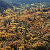 árboles en otoño color. — Foto de Stock