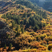 Trees in Fall color. — Stock Photo