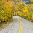 Road with Aspens in Fall. — Stock Photo