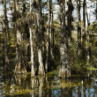 Wetland, FloridEverglades. — Stock Photo #9517165
