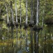 Wetland, Florida Everglades. — Stock Photo