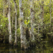 Florida Everglades landscape. — Stock Photo
