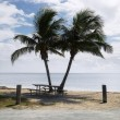 Picnic table with palm trees. - 