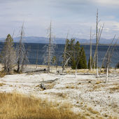 Yellowstone National Park, Wyoming. — Stock Photo