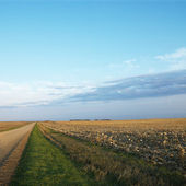 Dirt road with cornfield. — Stock Photo
