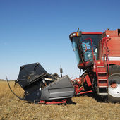 Combine harvesting. — Stock Photo