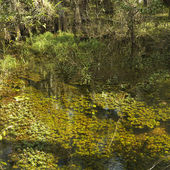 Wetland, Florida Everglades. — Stock Photo