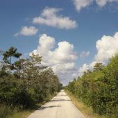 Carretera de everglades de florida. — Foto de Stock
