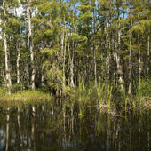 Florida Everglades wetland. — Stock Photo
