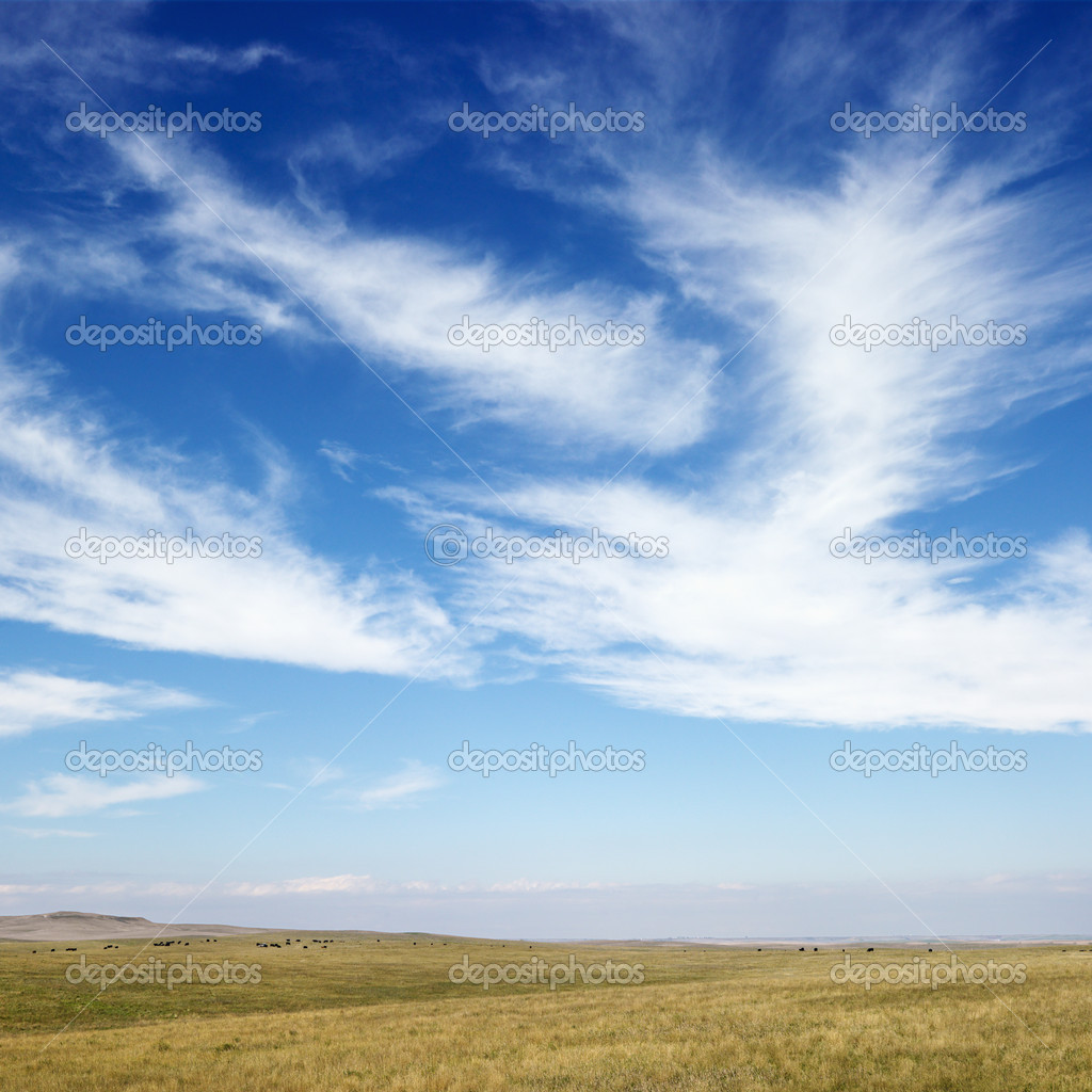 Sky scene of golden field and wispy cirrus clouds. — Stock Photo #9511386