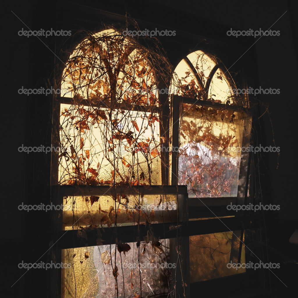 Sunlight glowing through dilapidated arched windows covered in vines creating dreamy mood. — Stock Photo #9513429