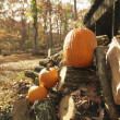 Pumpkins and firewood. - Stock Photo