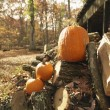 Pumpkins and firewood. — Stock Photo