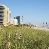 Miami beachfront. — Stock Photo