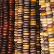 Royalty-Free Stock Photo: Multicolored Indian corn.