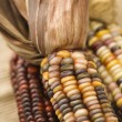 Multicolored Indian corn. - Stock Photo