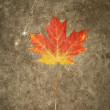 Stock Photo: Fall colored maple leaf.