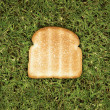 Stock Photo: Slice of toast on grass