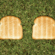 Toast on grass. - Stock Photo