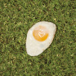Fried egg on grass. — 图库照片