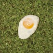 图库照片: Fried egg on grass.