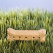 Dog treat in grass. — Stock Photo