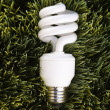Energy saving light bulb. — Stock Photo