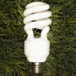 Photo: Energy saving light bulb.